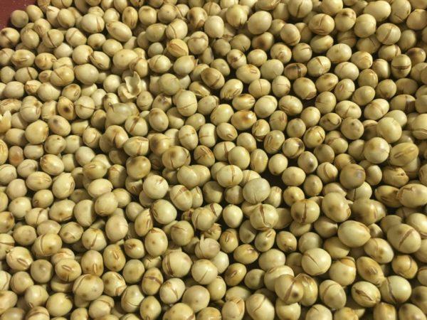 自家製きな粉の作り方3:大豆を冷ます