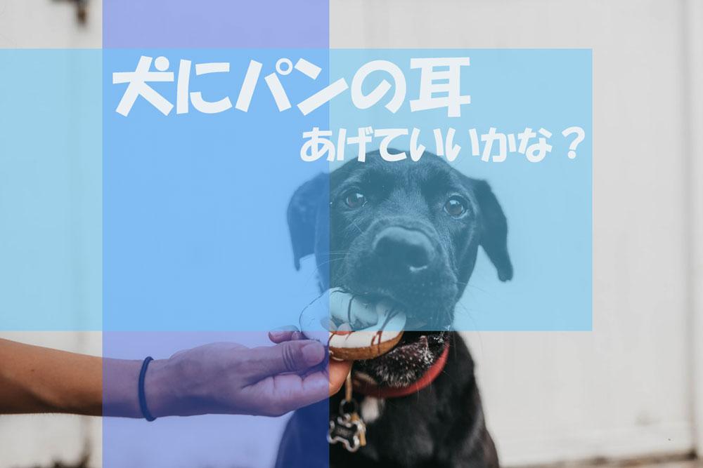 愛犬にパンの耳(小麦粉)を与えてはダメなのか?犬の栄養管理士によると
