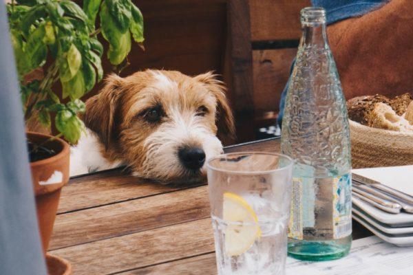 食べ物と飲み水