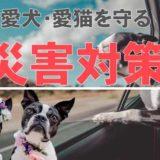 地震や台風からペット(犬猫)を守る災害対策を知ろう!