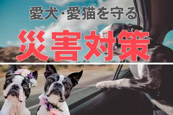 地震や台風からペット(犬猫)を守る災害対策を知ろう!1